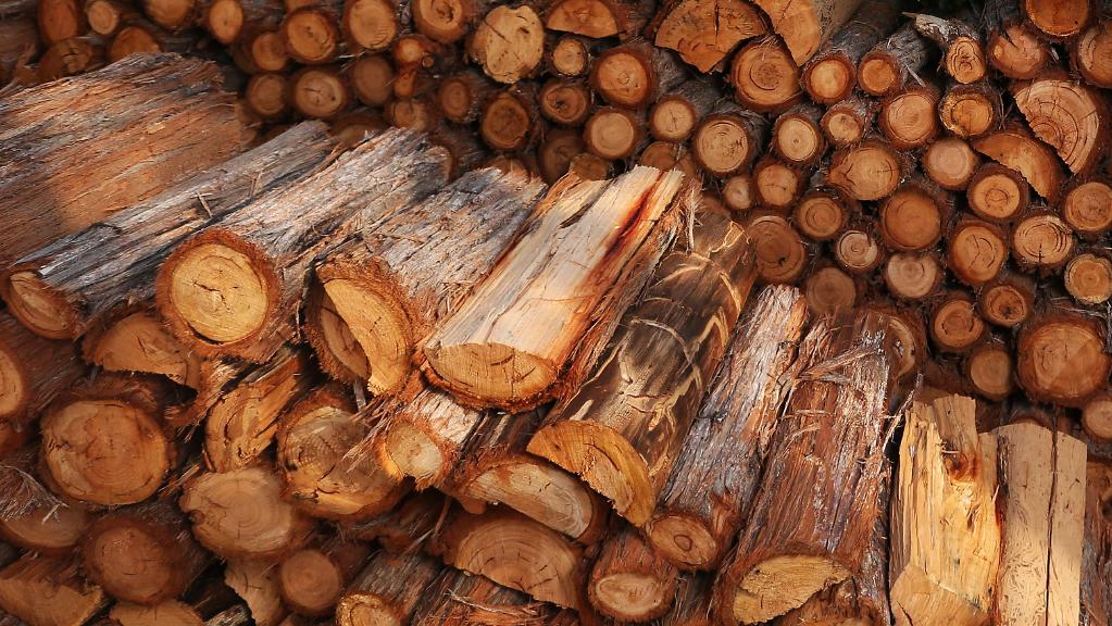 Đánh giá thị trường gỗ và bột giấy toàn cầu QI/2020