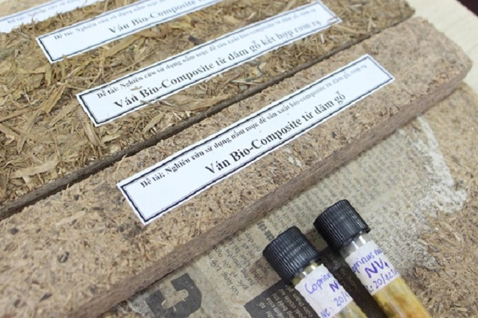 Ứng dụng CNSH trong ngành công nghiệp giấy và ván gỗ nhân tạo
